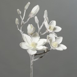 Magnolie velká zasněžená