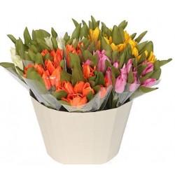 Tulipán koš, 108ks
