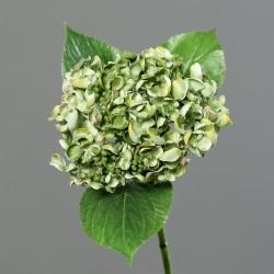 Hortenzie drobné květy