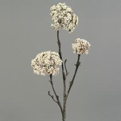 Anethum větev