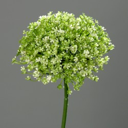 Česnek květ, Allium