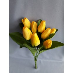 Tulipán, 6 barev