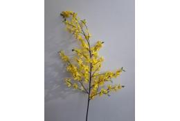 Forsythia (zlatý déšť), velká