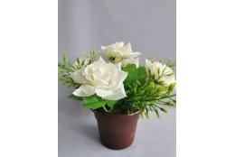 Růže v květináči/ bílá