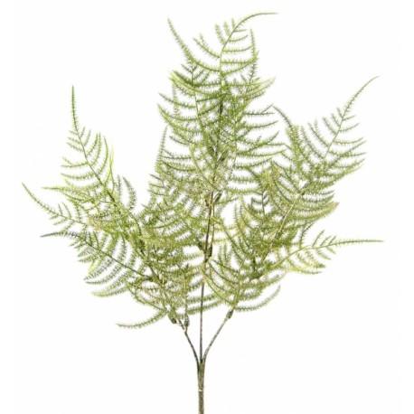 Větvička asparagus