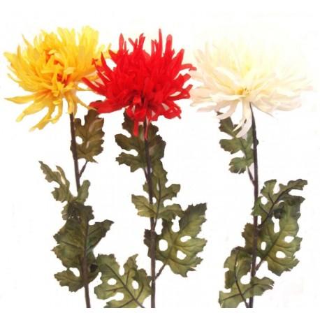 Chryzantéma  - bílá