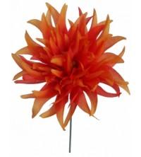 Chryzantéma vazbovka